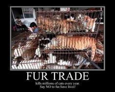 Cat And Dog Fur Trade Facts