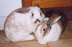 Rabbit Rehome - Should I get my Rabbit a Friend?