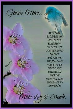 Afrikaanse Quotes, Goeie More, Morning Greetings Quotes, Special Words, Christmas Greetings, Bible Quotes, Poems, Van, Night