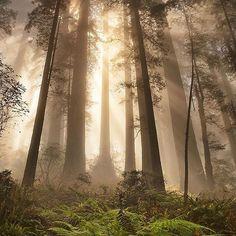 Del Norte Coast Redwoods State Park, California. Photo by: @pthomas5313 Explore. Share. Inspire: #earthfocus #beautifulpic #nature #photooftheday