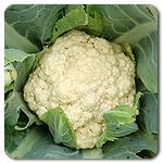 Edith F1 Cauliflower