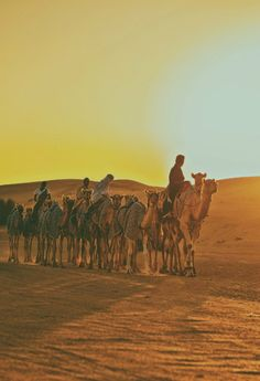Camel Sunset by Ajith Gopinathan.