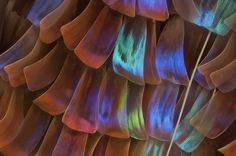 Scales on a butterfly wing -