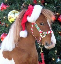 Saber is ready for Christmas (Rachel Cawley) Christmas Horses, Cowboy Christmas, Christmas Animals, Christmas Cats, Merry Christmas, Blue Christmas, Christmas Ideas, All The Pretty Horses, Beautiful Horses