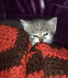 Beautiful Feral Kitten Pictures 1