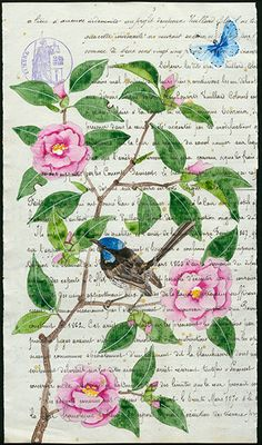 Camellia and blue wren - watercolour, gouache and pencil on an antique French document. a little commission completed earlier this year