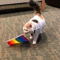 Cute Cats, Funny Cats, Lgbt Flag, Gay Aesthetic, Soft Grunge, Gay Pride, Cat Memes, Dog Cat, Corgi