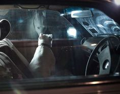 Forlorn Pet Photography - Photographer Martin Usborne 'The Silence of Dogs in Cars' Seri (GALLERY)