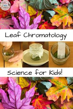 Learn all about Leaf Chromatology for kids with this simple science experiment. This fall activity teaches kids why leaves change colour in the autumn. Kids Learning Activities, Autumn Activities, Teaching Kids, Toddler Science Experiments, Science For Kids, Arts And Crafts Projects, Science Projects, Change Colour, Leaves