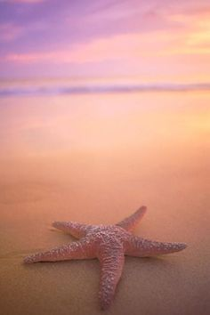 "The Starfish Story: You can make a difference  ""It mattered to that one"""