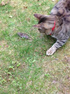 Mijn eerste muis gevangen 😸