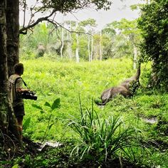 Me #filming a #Forest #elephant in #LoangoNationalPark last year #wildlife #wildlifefilming #LycaonExpeditions #Gabon #rainforest #Africa #africanlove #lastparadise #natgeo #ilovemyjob