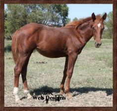 High Brow Quixote - Daughter of High Brow Hickory | Our Mares ...