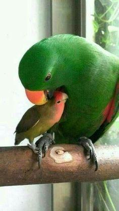 All Birds, Cute Birds, Pretty Birds, Beautiful Birds, Animals Beautiful, Love Birds Pet, Exotic Birds, Colorful Birds, Animals And Pets