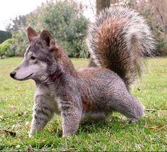 Continuing the theme of hybrids ... animal fotozhaba