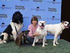The whole family is here now! #petsforpatriots #bigdogs #puppylove #doglover