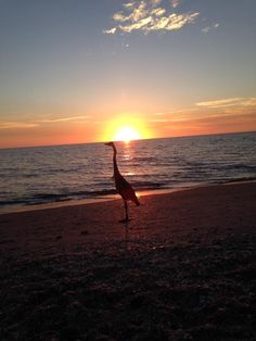 Englewood Beach Fl