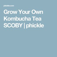 Grow Your Own Kombucha Tea SCOBY | phickle