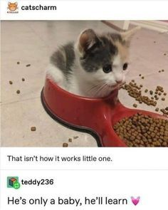 Exceptional cute cats tips are offered on our internet site. Take a look and you wont be sorry you did. Animal Jokes, Funny Animal Memes, Funny Animal Pictures, Cat Memes, Funny Memes, Hilarious Pictures, Funniest Jokes, Cute Little Animals, Cute Funny Animals
