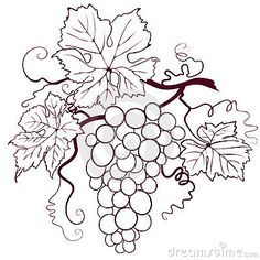 Illustration about Grapes With Leaves, editable vector illustration. Illustration of drink, grapes, botany - 6022617 Coloring Books, Coloring Pages, Leaf Clipart, Wine Art, Bottle Painting, Wine Bottle Crafts, Pyrography, Grape Vines, Embroidery Patterns