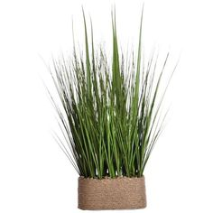 Laura Ashley 28-in. Artificial Onion Grass Plant (Hemp) (84 AUD) ❤ liked on Polyvore featuring home, home decor, floral decor, laura ashley and laura ashley home decor