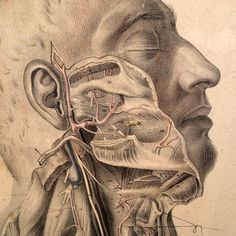 illustrative plates from an 1851 copy of 'maclise's surgical anatomy', these are so detailed and beautifully drawn.