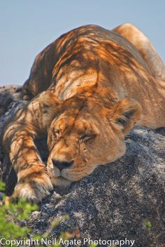 """Asleep In The Shade by Neil Agate on 500px """"IF I HAVE TO PICK UP ONE MORE CARCASS THERE'S GOING TO BE HELL TO PAY!"""" RP BY HAMMERSCHMID"""