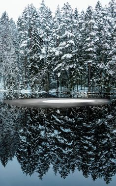 Snow Covered trees reflecting in a pond (Sweden)