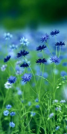 163 Beautiful Types of Flowers + A to Z With Pictures Types Of Flowers, Beautiful Flowers, Field Of Flowers, Colorful Flowers, Meadow Flowers, Purple Flowers, Simply Beautiful, Spring Flowers, Wild Flowers