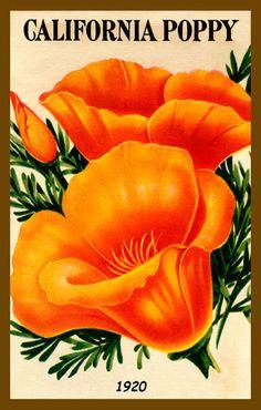 Olde America Antiques | Quilt Blocks | National Parks | Bozeman Montana : Flowers - California Poppy 1