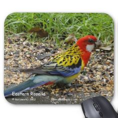 Eastern Rosella Mouse Pad - Australian Wildlife.  Click on photo to view item then click on item to see how to purchase that item.