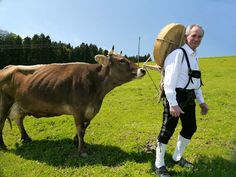 Käse aus Scheidegg im Allgäu