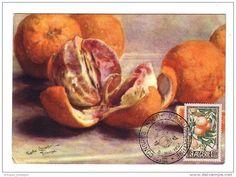 Algérie Carlo Chiostri Oranges cachet IIIe Congrès International d´Agriculture 8 mai 1954
