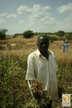 Frische Erdnüsse   solar-afrika.de
