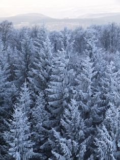 Christmas trees trees and christmas on pinterest