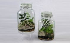 10 Most Preferred Plants For Terrarium