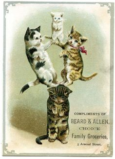 Illustration by Helena Maguire for vintage trade card. That cat on the bottom kills me! get some yourself some pawtastic adorable cat apparel! Photo Chat, Cat Posters, Cat Cards, Beautiful Cats, Illustrations, Vintage Postcards, Belle Photo, Crazy Cats, Cool Cats