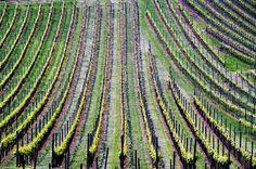 vineyard baden wurttemberg germany