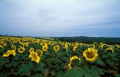 Biei, Hokkaido - summer time