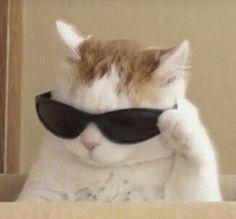 Fotos im Community Kommentarbereich 5212 Fotos VK Cute Baby Cats, Cute Little Animals, Cute Funny Animals, Funny Cats, Funny Looking Animals, Dumb Cats, Cute Animal Photos, Funny Animal Pictures, Funny Photos
