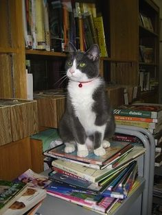 Page has ruled the roost at the Cazenovia Library in New York since 2009, taking over from former hard-working house cats Dewey Decimal, Kitty, and Jesse (who apparently loved to ride the elevator). Page is extremely playful, and if this photo is any indication, loves to watch over the library while perched on as many books as possible.