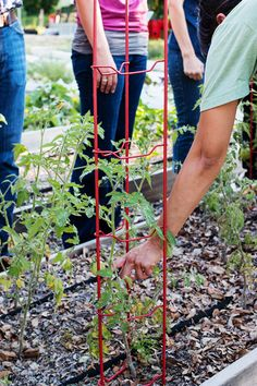 What to plant in July. #gardening