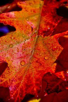 Wet Orange Red leaf in autumn