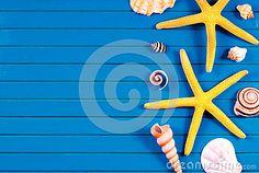 Sea stars and marine things. #stockphoto #seashells #seastars #ocean