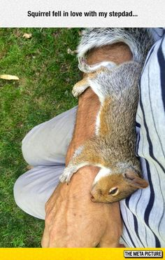 The love squirrels give