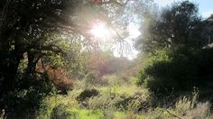 Newhall - Placerita Canyon Nature Center, Oak of the Golden Dream, small river that kids can play in