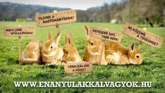 Place Cards, Funny Pictures, Place Card Holders, Daily Wisdom, Bunnies, Poems, Easter, Smile, Humor