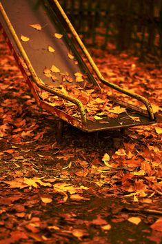 slide down and land in a big pile of leaves ~ ♥