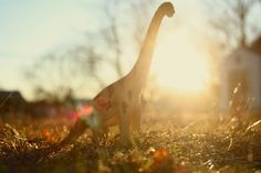 Schleich Brachiosaurus. Oh my God... oh my god....