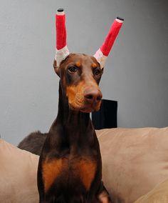 Pet gift Doberman Winter Hat, Doberman Warmer, Dog Hat ...